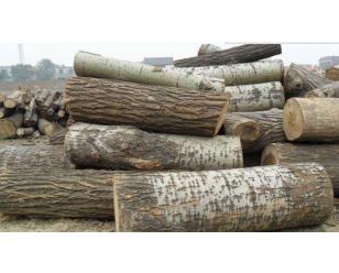 南京杨树水杉杂树回收
