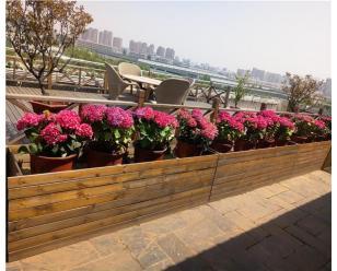 户外花卉租赁